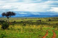 Kenia, cuna del mundo