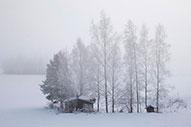 Laponia: Viaje a la tierra de Papa Noel