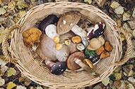 Ferias gastronómicas en otoño