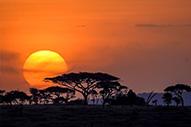 Explorando el Parque Nacional del Serengueti
