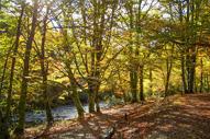 Bosques más bonitos del centro y sur de España
